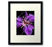 """Purple Iris"" Framed Print"