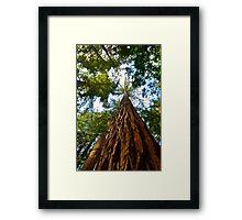 Redwood Skies Framed Print