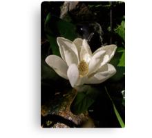 Sweet Magnolia Blossom Canvas Print