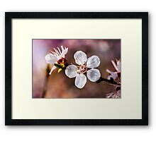 Spring Fruit Flower Framed Print