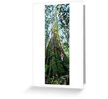 Mountain Ash (Eucalyptus regnans) Greeting Card