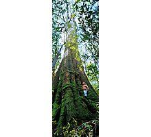 Mountain Ash (Eucalyptus regnans) Photographic Print