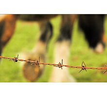Barbed Wire Horse Photographic Print