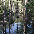 """Spring Rains Cypress Creek"" by Rob Pitzer  by Rob Pitzer"