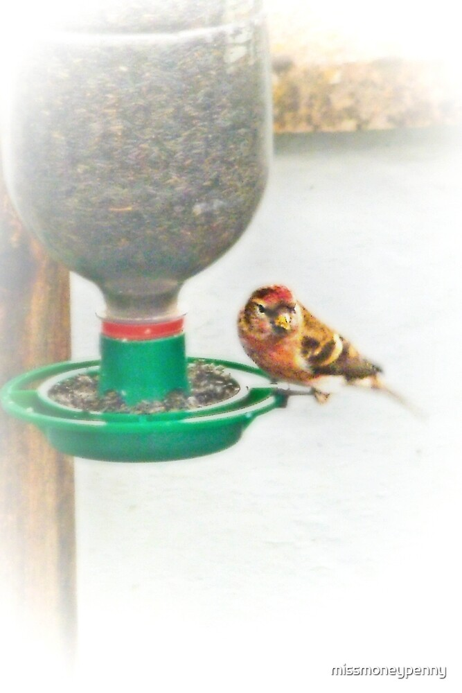 A redpoll came to call by missmoneypenny