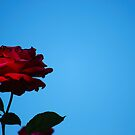 Red, red rose by Rowan  Lewgalon