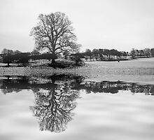 Reflect on a tree by Eddie Dowds