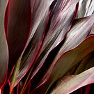 Cordyline leaves..  by Isa Rodriguez