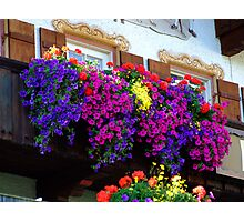 flowers and window Photographic Print
