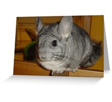 Unbelievable Chinchilla Greeting Card