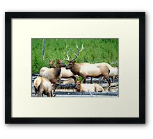 Annual Fall Rendezvous by Rob Pitzer Framed Print