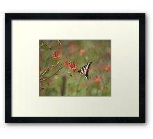 Swallowtail in Scarlet Dream Framed Print