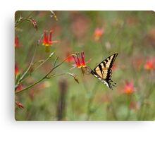 Swallowtail in Scarlet Dream Canvas Print