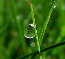 Crystal Dewdrop by Rebecca Bryson