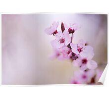 Blossom border Poster
