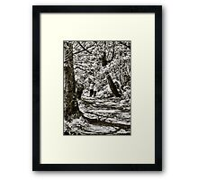 A stroll in the woods Framed Print