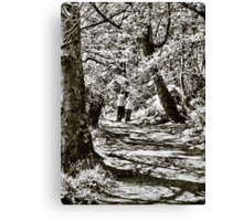 A stroll in the woods Canvas Print