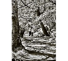 A stroll in the woods Photographic Print