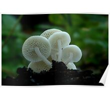 Fungi Season 32 Poster