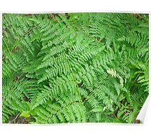 Oregon Ferns Poster