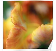 Abstract Tulip 1 Poster