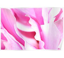 Peony Abstract Poster