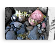 Coloured rocks, Sandringham Beach Canvas Print