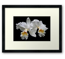 """""""Twin White Orchids"""" Framed Print"""