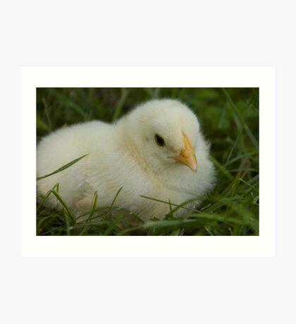 Baby chick Art Print