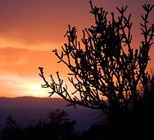 Cholla Sunset #2 by Mitchell Tillison