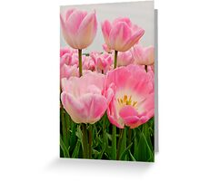 PINK CANDY TULIPS Greeting Card