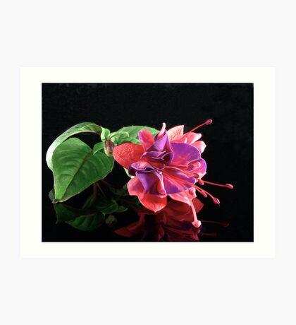 Fuchsia XVII Art Print