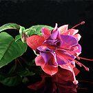 Fuchsia XVII by Tom Newman