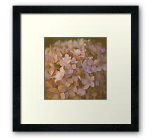 Pink Hydrangea Polaroid Framed Print