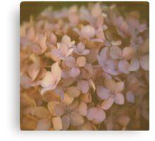 Pink Hydrangea Polaroid Canvas Print