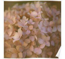 Pink Hydrangea Polaroid Poster