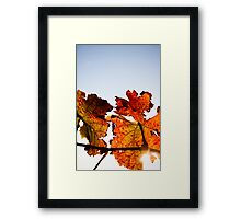 Red, red vine Framed Print