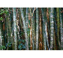 The Marked Bamboo Photographic Print