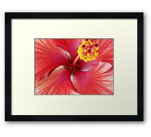 flamenco. Framed Print