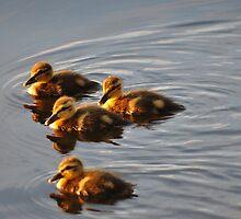 The Chicks by Karl F Davis