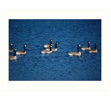 Geese on Killarney Lake Art Print