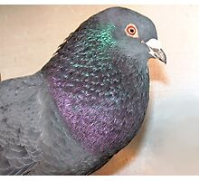 Duffy - Love for Pigeons  Photographic Print