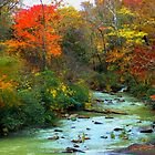 Chill Of An Early Fall by NatureGreeting Cards ©ccwri
