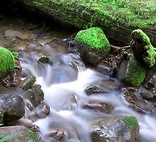 Nature Flow by Christopher  Boswell