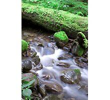 Nature Flow Photographic Print