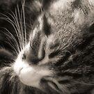 Baby Kitty by Susanne Correa