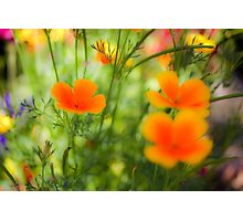 flowering garden. Yellow blooming flowers Photographic Print