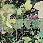"""""""Wild Berries"""" by Barry Kadische"""