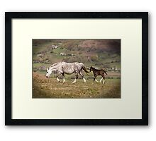 Pony mother and young foal  Framed Print