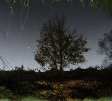 Reflection 1 by Rainer Kuehnl
